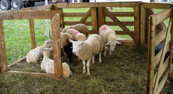 Kingston Sheep Dog Trials